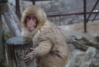 子猿の写真・画像素材[4195697]