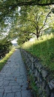 木のトンネルがある石畳の散歩道の写真・画像素材[4209142]
