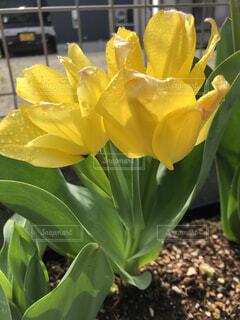 花のクローズアップの写真・画像素材[4289044]
