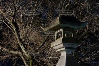 夜の樹木と灯篭の写真・画像素材[4202246]