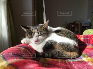 猫の写真・画像素材[180240]