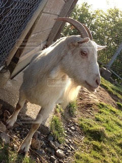 動物の写真・画像素材[42564]