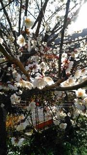 春の写真・画像素材[4199140]