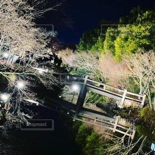 なばな夜景の写真・画像素材[4201499]