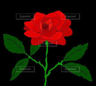 赤いバラの写真・画像素材[4211328]