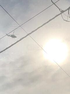 曇りの日に止まっている鳥の写真・画像素材[4206164]