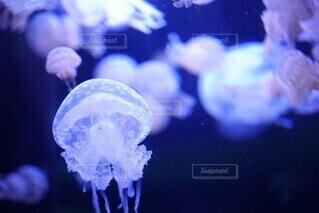 クラゲのクローズアップの写真・画像素材[4208834]