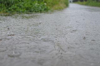 水溜りに雨の波紋の写真・画像素材[4371388]