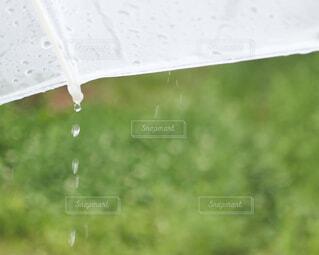傘からの雫の写真・画像素材[4371506]