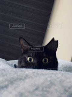 こちらを見つめる子猫の写真・画像素材[4224779]