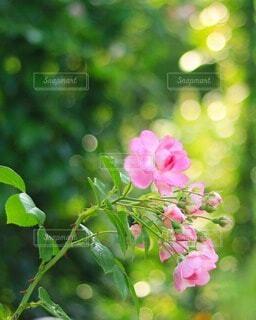 ピンクの花と緑の写真・画像素材[4213497]