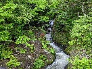日光の竜頭の滝の写真・画像素材[4215298]
