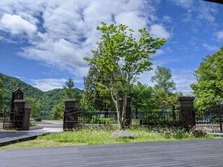 初夏の青空と大きな木の写真・画像素材[4215297]