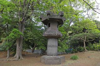 上野恩賜公園のお化け灯籠の写真・画像素材[4564881]