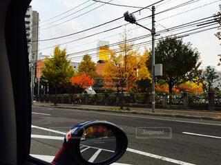 秋の大通りの写真・画像素材[4216771]