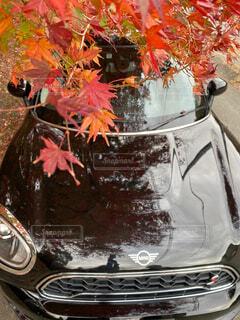 紅葉が映る車の写真・画像素材[4216808]