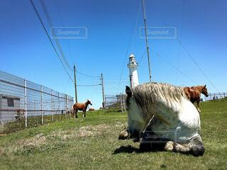 野生の馬の写真・画像素材[4288226]