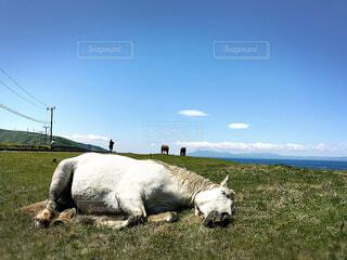 野生の馬の写真・画像素材[4288228]