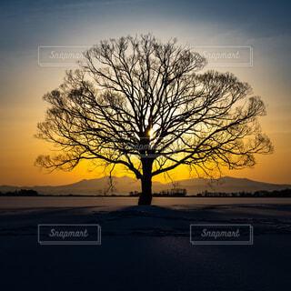 朝日を浴びる樹の写真・画像素材[4219470]