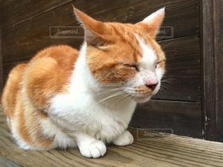 猫の写真・画像素材[179587]