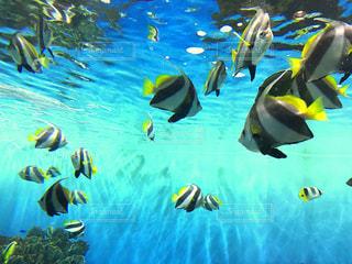 水のカラフルな水泳のグループの写真・画像素材[1088164]