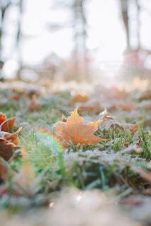 秋の紅葉と光の写真・画像素材[4219900]