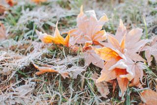 落ち葉と紅葉の写真・画像素材[4219894]