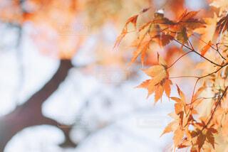 紅葉と空の写真・画像素材[4219897]