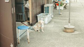 田舎の飼い犬の写真・画像素材[4219901]
