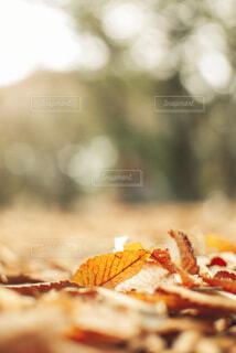 落ち葉の写真の写真・画像素材[4219910]