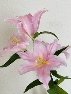 紫色の花で満たされた花瓶の写真・画像素材[4346960]