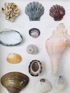 美しい貝たちの写真・画像素材[4221289]