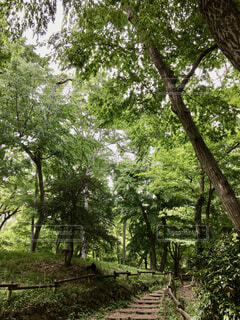 初夏の新緑の井の頭公園の写真・画像素材[4359695]