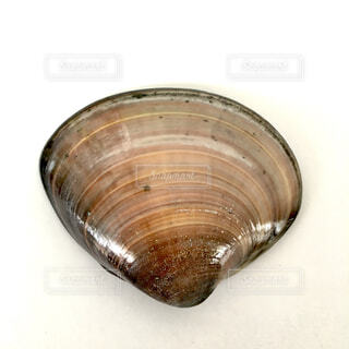 江ノ島で拾ったピカピカのハマグリの貝殻の写真・画像素材[4359715]