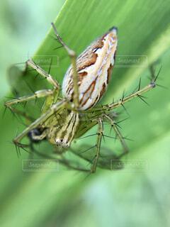 食事中のササグモの写真・画像素材[4621671]