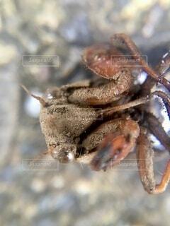 セミの蛹のクローズアップの写真・画像素材[4647289]