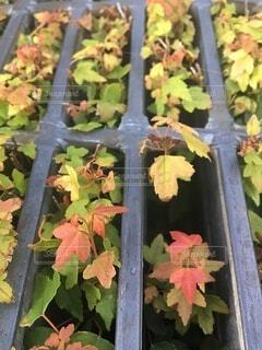 側溝に植物が元気に育ってるの写真・画像素材[4709112]