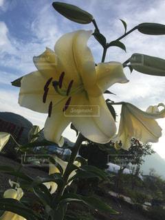 お花畑の写真・画像素材[179948]