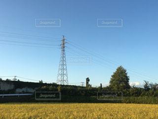 背景の木と大規模なグリーン フィールドの写真・画像素材[772311]