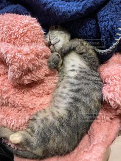 毛布と猫の写真・画像素材[4225048]