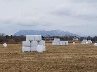乾燥した草原に佇む牧草ロール。の写真・画像素材[4245097]