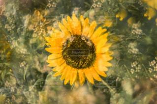 花のクローズアップの写真・画像素材[4225035]