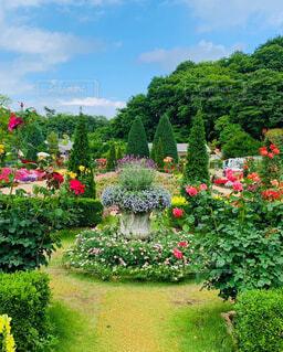 花園のクローズアップの写真・画像素材[4226720]
