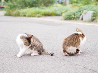 猫の写真・画像素材[179974]