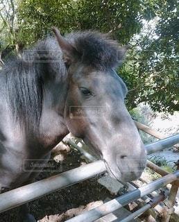 お馬さんの写真・画像素材[4395389]