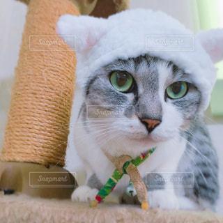 猫の写真・画像素材[180081]