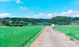 犬,自然,風景,夏,後ろ姿,散歩,田舎