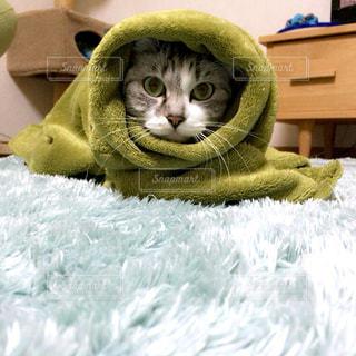 猫の写真・画像素材[191884]