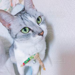 猫の写真・画像素材[242315]
