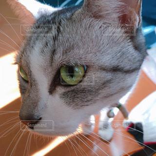 猫の写真・画像素材[283689]